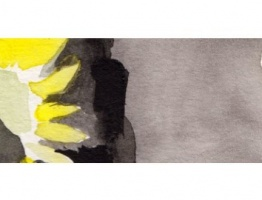 Sunflowers – Slideshow
